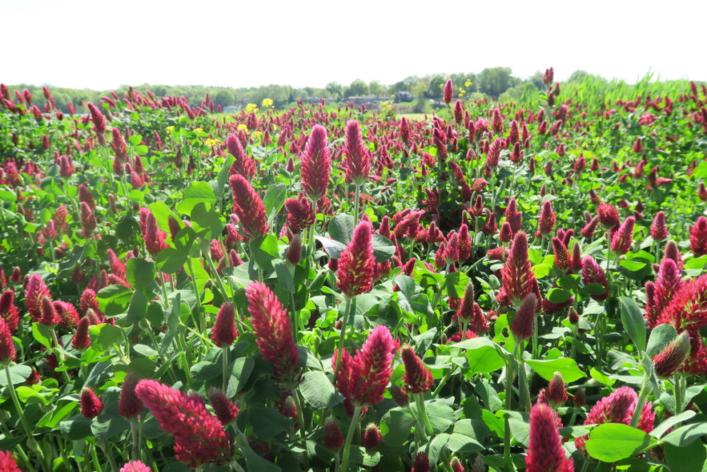 Cover Crops Tennessee
