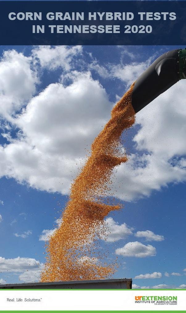 Corn Grain 2020